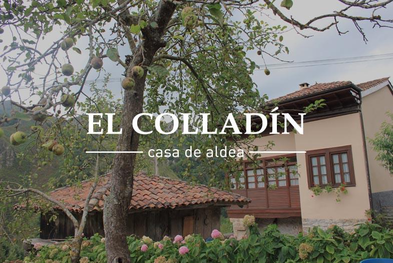 06colladin